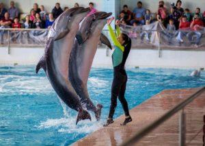 Поход в дельфинарий