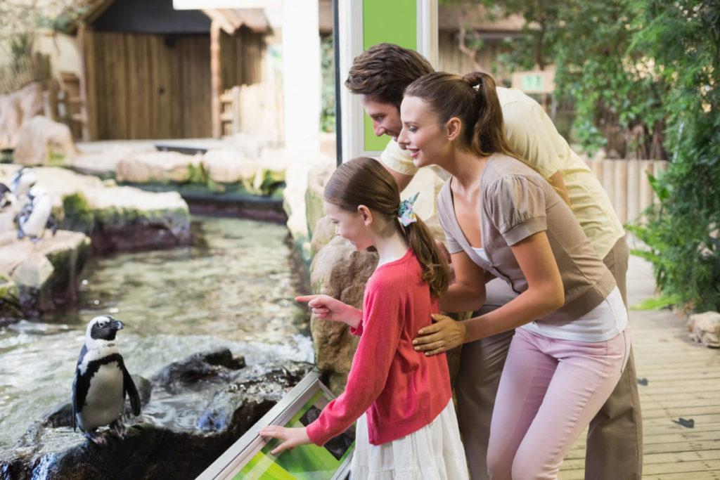 Семейный поход в зоопарк